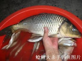钓鲫鱼时遇到小鱼怎么办?