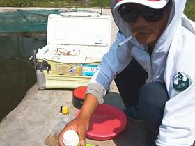 竞技钓鱼比赛中途断口如何应对?