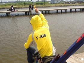 黑坑钓鲤鱼的一种上饵手法