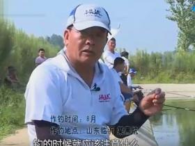 化老师讲解黑坑鲤鱼饵料状态