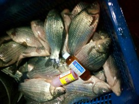 春季钓鱼注意事项