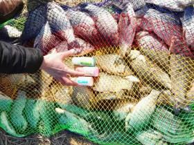 春季黑坑钓鲫鱼饵料