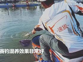 速抜促食剂2号钓鲤鱼