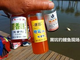 钓回锅鲤鱼饵料状态