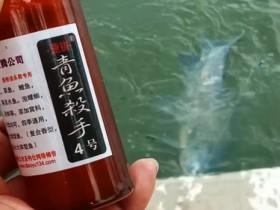 冬季钓青鱼要注意线组 有视频
