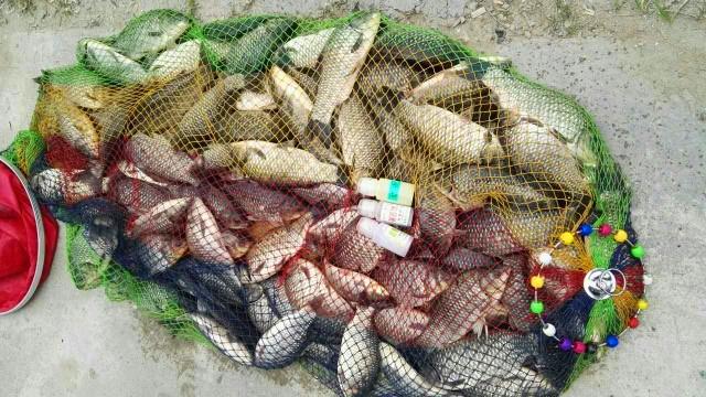 速拔哥使用果酸促食钓鱼