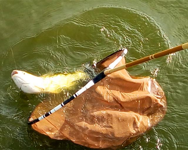 钓鱼用抄网选哪种好