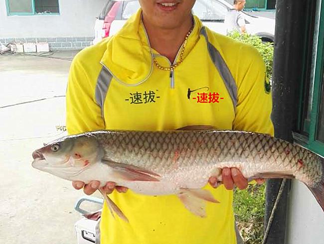 钓草鱼一般技巧