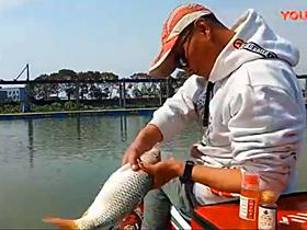 还是快速拔鱼的视频都是回锅鱼