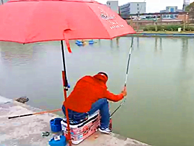 冬季下雨天快速拔钓黑坑鲤鱼